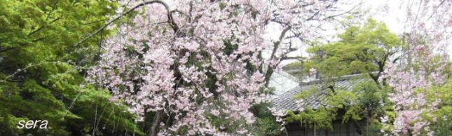 2008_04100012.JPG