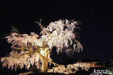 2008_04030340nikki.JPG