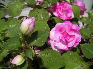 庭の花・・・。