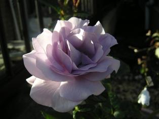 2個目の花の写真