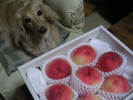 桃頂きましたぁ。