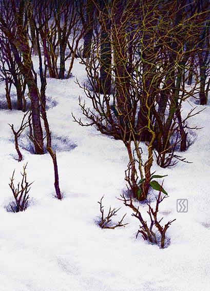 0317雪解け林2.jpg