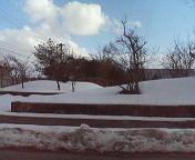 長岡の積雪