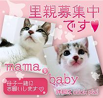 bnner_mmbb_rgr02.jpg