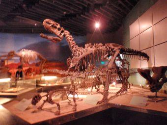 6.18恐竜.jpg