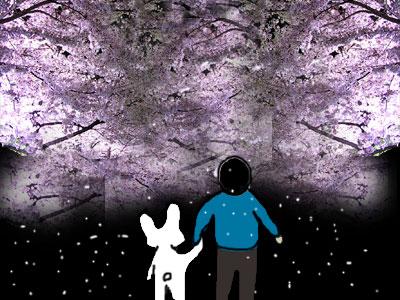0227夜桜.jpg