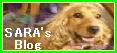 SARA039;S Blog