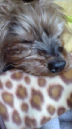 寝てる小徹