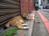 CIMG7106猫.JPG