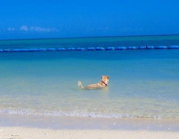 ビーチの犬.jpg