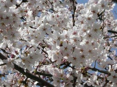 2008 お花見2.jpg
