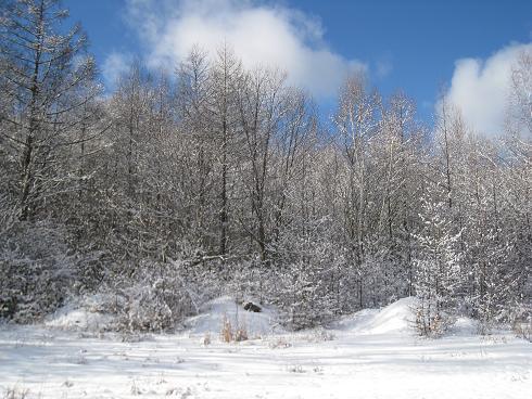 御岳麓の雪景色
