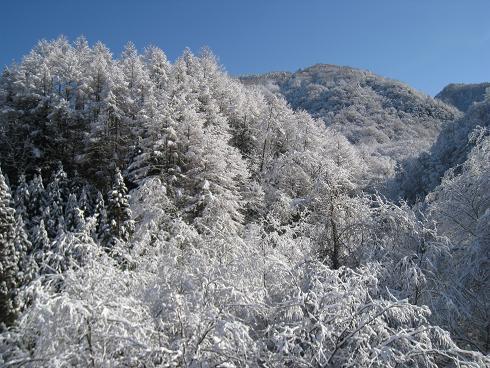 標高1500メーター付近の山の雪化粧