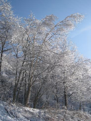 この冬初めて見た樹氷