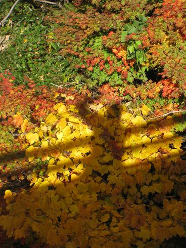 紅葉と私の影