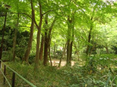 下賀茂神社の新緑2008