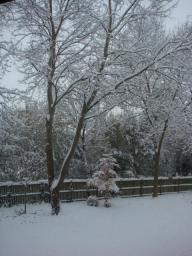 雪のチェチェスタ