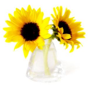 flower11_300.jpg