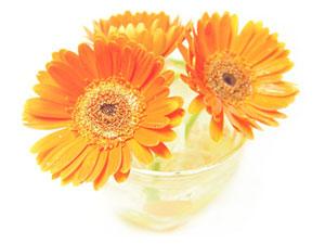 flower24-2_300x225.jpg