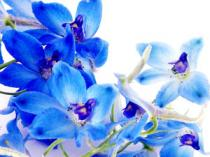 flower19-2_300x225.jpg