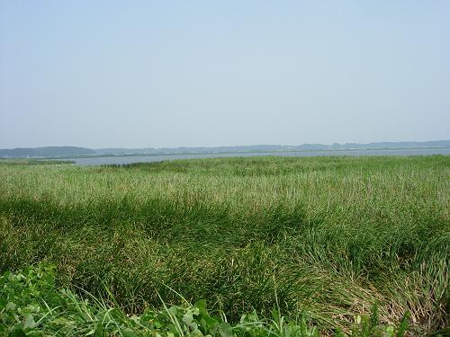 北印旛沼-web.JPG