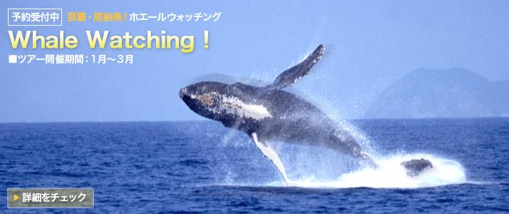 whale_top.jpg