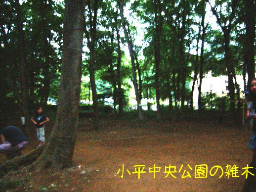 森で遊ぼう.jpg