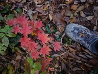 足下にも紅葉