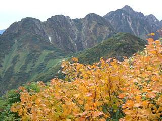 黄葉と北方稜線