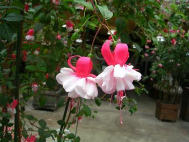 花鳥園 0020002.jpg