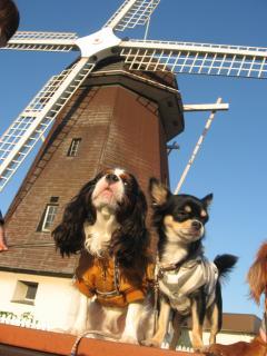 風車でパチリ♪
