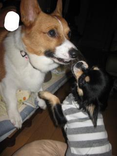 ごん父♪お鼻さんかませて~