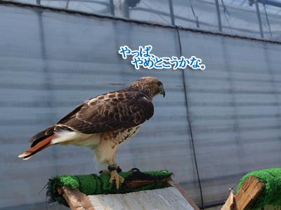 鳥・・だよね?.jpg