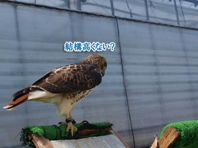 鳥でしょ?.jpg