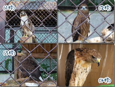 鳥シリーズ.jpg
