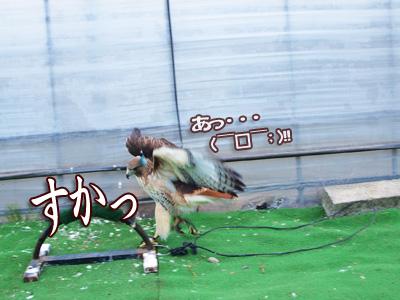 まさか・・鳥だよね?.jpg