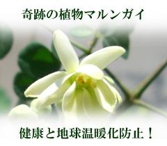 200804281811151.jpg