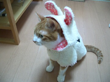 チョロウサギになる4.jpg