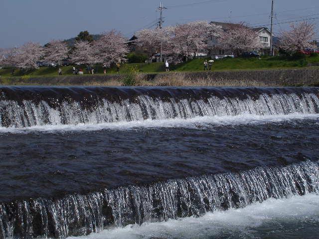 半木の道 京都賀茂川