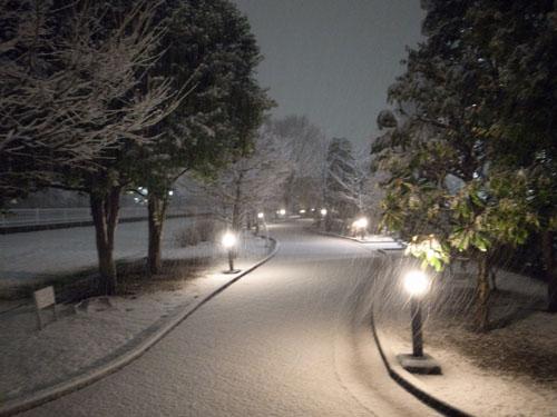 snowinyokohama02