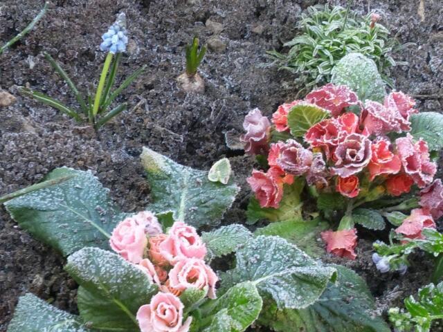 2012.1.27 霜降りジュリアン