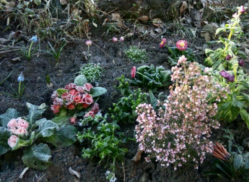 2012.1.27 霜降り福袋ガーデン