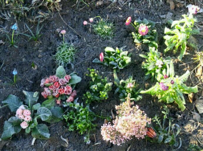 2012.1.27 霜降り福袋ガーデン上から