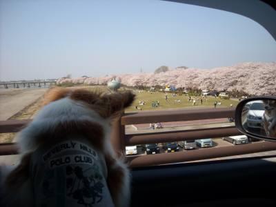 宮川堤とスノオ車にて.jpg
