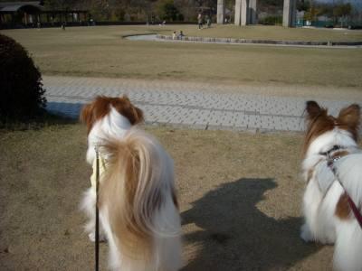 大仏山公園にて二匹.jpg