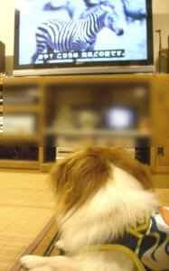テレビ犬タンタン2.jpg