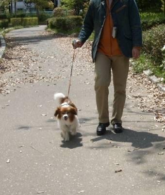 中央公園 お散歩.jpg