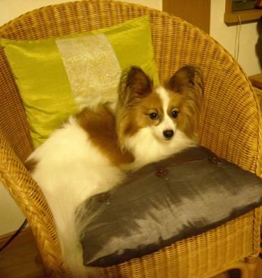 王様の椅子1.jpg