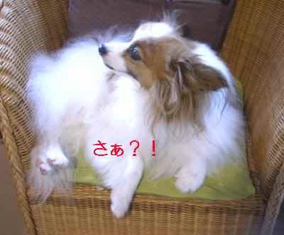 スノオ さぁ?.jpg