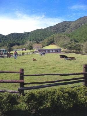 大内山 牧場.jpg